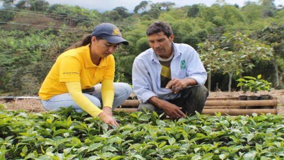 Cauca avanza con el Programa de Renovación de cafetales 2021