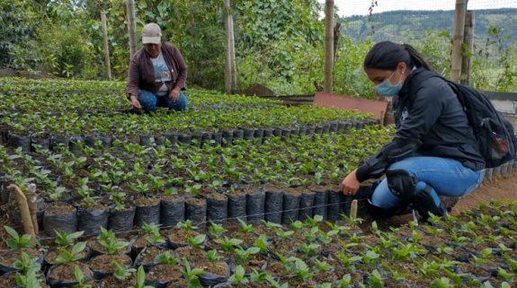 Caficultores con certificación practices, reciben reliquidación por más de mil millones de pesos